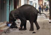 Filleri Sakinleştirmek İstedi. Canından Oldu..