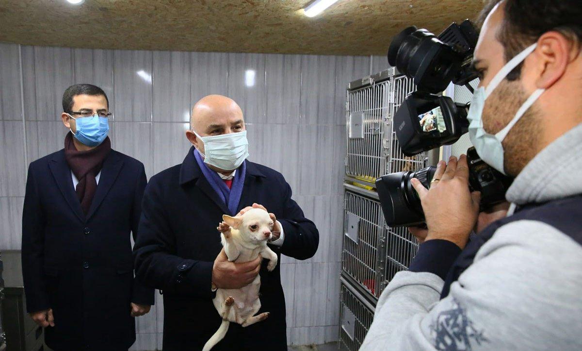 68 Adet cins köpek Keçiören belediyesi korumasında