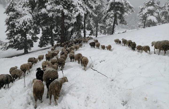 Ankara'da kar yağışı başladı!