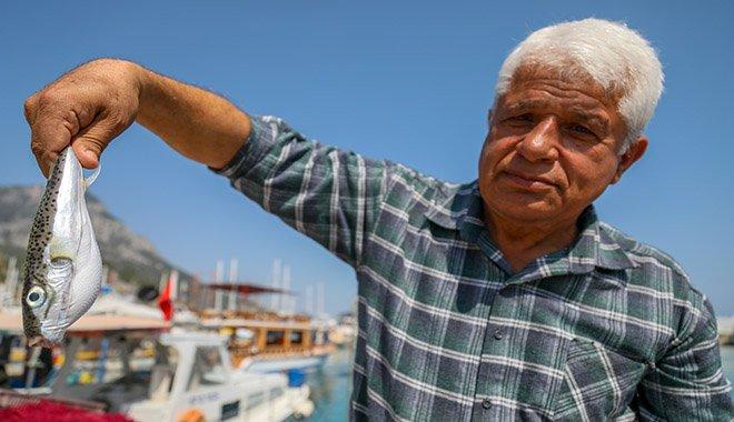 Balon balığıyla mücadelede projesi balıkçıları sevindirdi