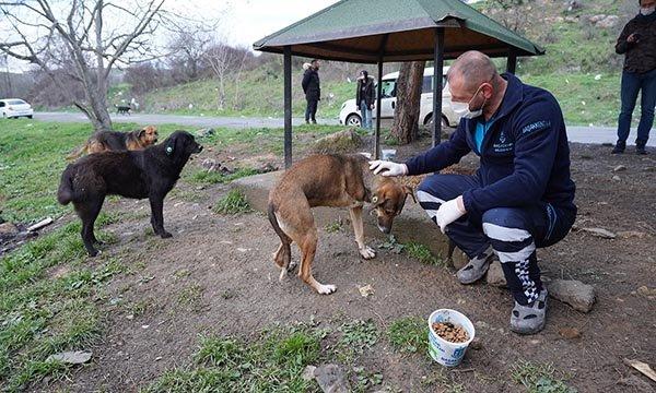 Başakşehir'de sokaka hayvanları unutulmadı