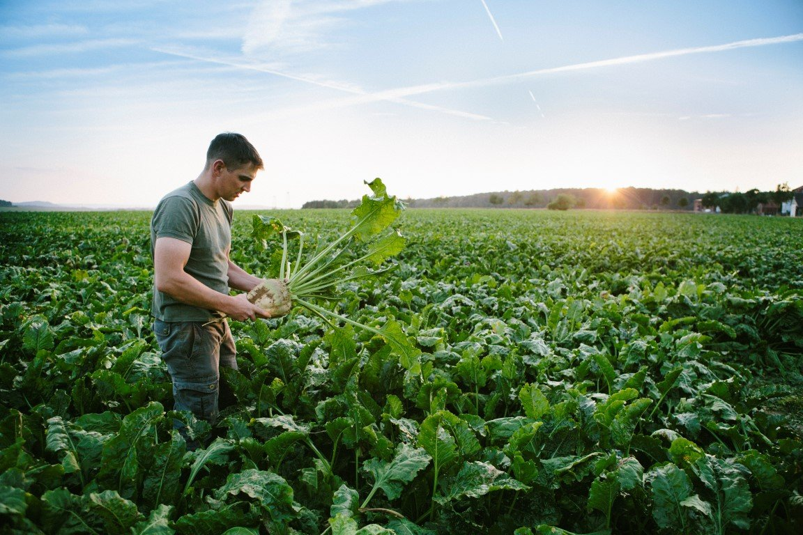 Çevresel Sorunlar Gıda Alışkanlıklarını Etkiliyor
