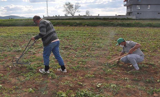 Çiftçilerin 'kene' endişesi