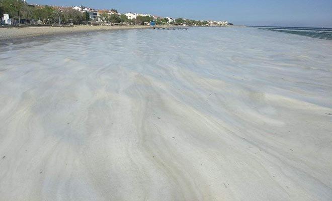 #Deniz salyaları Marmaraereğli sahillerini kapladı(video)