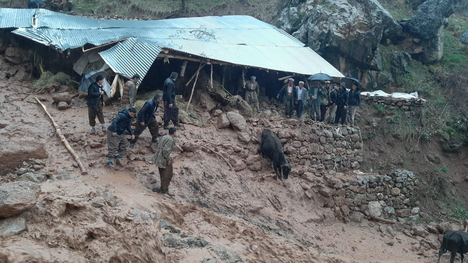 Derecik'te yağmurda ahır çöktü; 8 büyükbaş kurtarıldı
