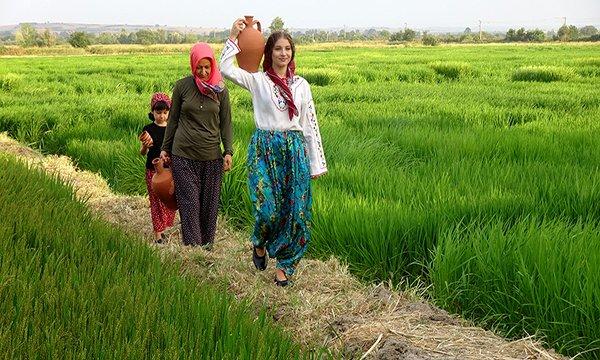 Edirne'de çeltik tarlaları, fotoğraf stüdyosuna döndü(video)
