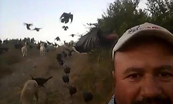 Hindiler, sahibinin komutuyla uçuyor video