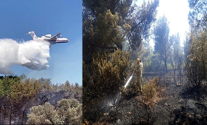 İzmir Urla'da orman yangını
