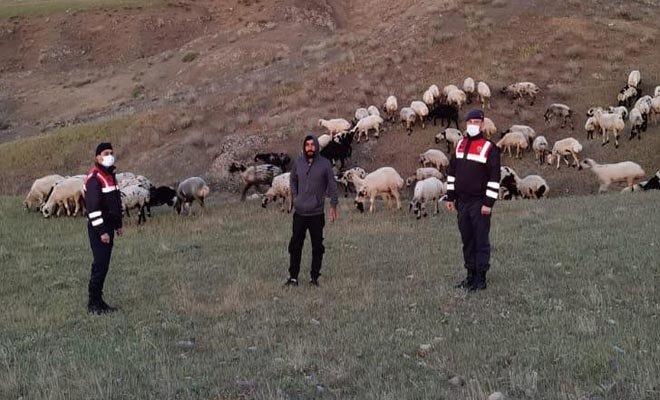 Kayıp 190 hayvan, dronla 9 saatte bulundu