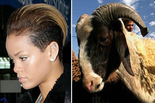 Keçi Rihanna