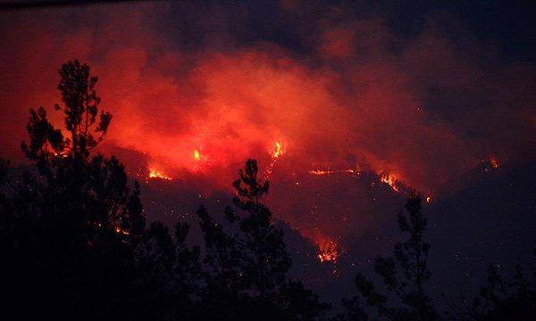 Kozan'da ormanlık alanda yine yangın çıktı