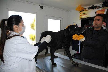 Kuduz aşısı tamamen ücretsiz