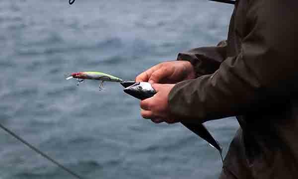 Olta balıkçıları,Sahile dolan palamutları avladı(video)