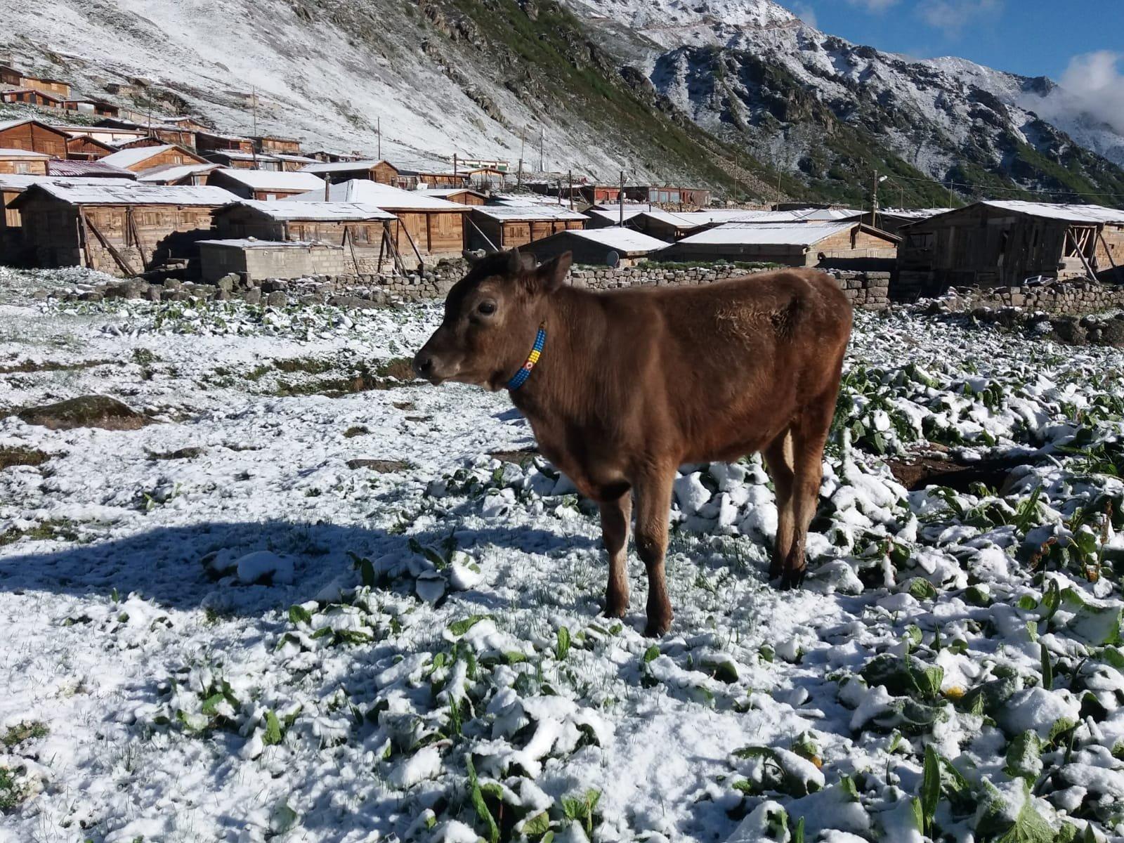 Rize'de yaylaya kar yağdı