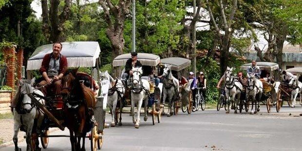 Ruam Yönetmeliğine Göre Atlar Ruam Değil!