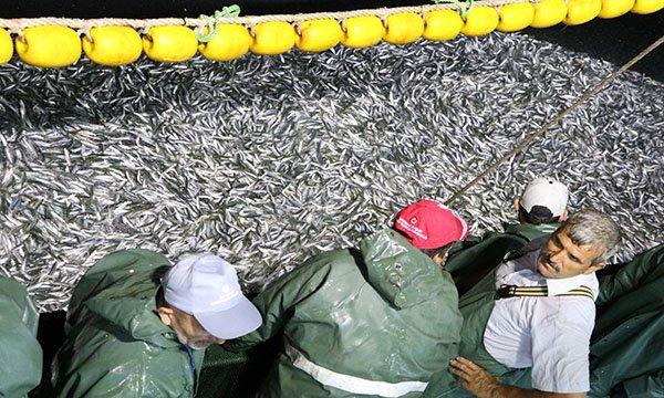 Sezonun ilk gecesi 25 ton sardalya avlandı