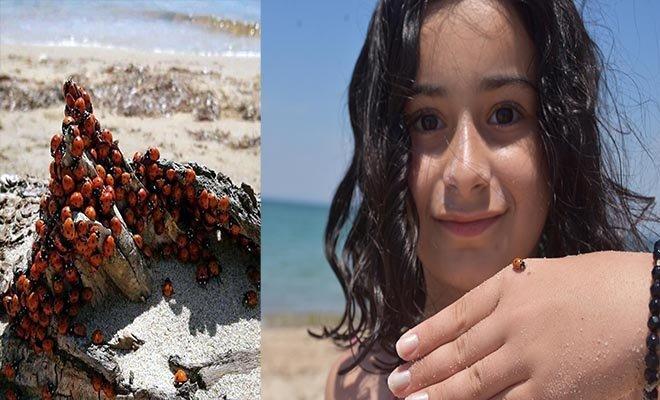 Uğur böceklerinin insan için zararlı yapısı yok